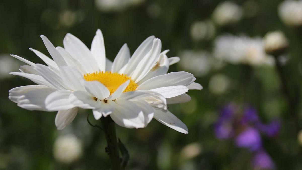 Isabel Friedl - Heilpraxis Rückhalt - Blume