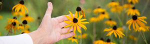 Isabel Friedl - Heilpraxis Rückhalt Blume